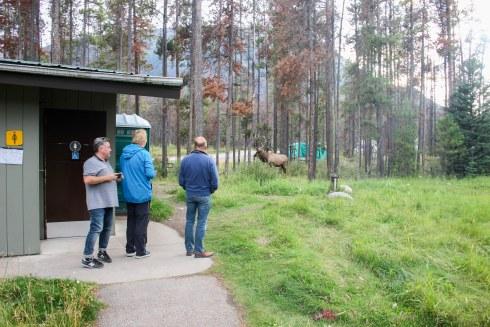 Camping Wapiti à Jasper