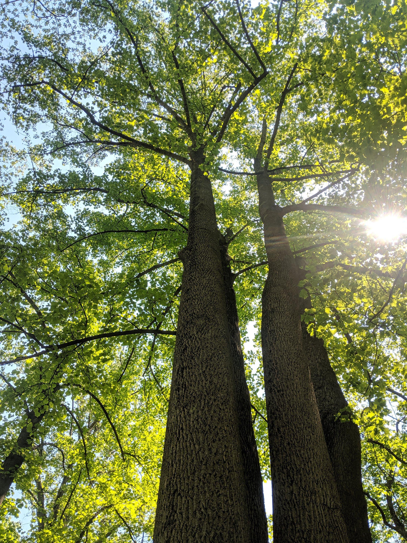 Hunting Trees, Hunting Morels