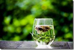 thé anti-oxydant