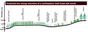Florida Wetlands: Gulf Coast Salt Marshes