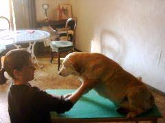 Faut-il muscler ou assouplir son cheval ou son chien ?