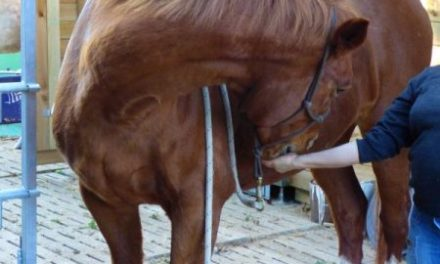 Comment faire un stretching de l'encolure du cheval et du cou du chien ?
