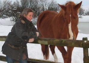 Comment choisir et rêver son cheval idéal ?