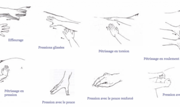 Techniques de massage pour animaux