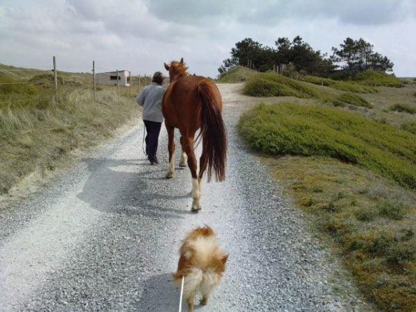 Comment repérer les boiteries du cheval, du chien ?