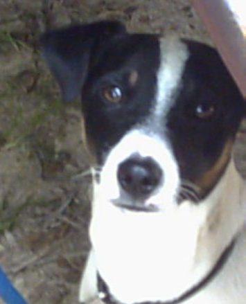 Quand voir un ostéopathe pour chien ?