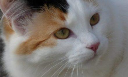 Massage des tensions du dos du chat