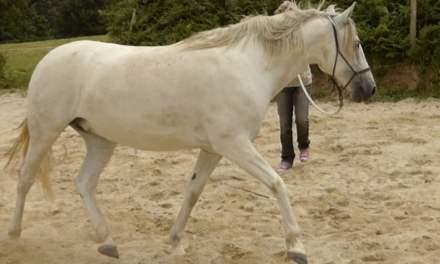 Ostéopathie et équitation