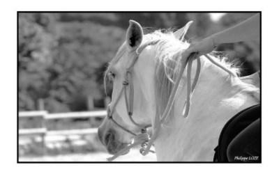 La connexion homme cheval