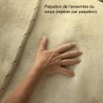 Massage interactif avec le cheval