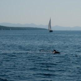 Dalmatien 2011