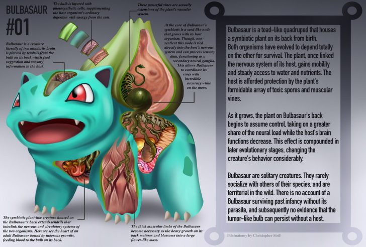 bulbasaur_anatomy__pokedex_entry_by_christopher_stoll-dac1w9d