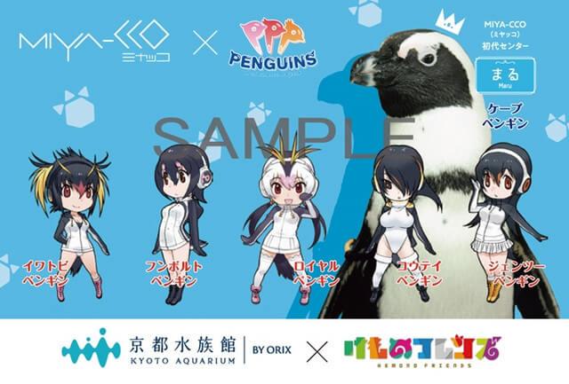 Kemono Friends' penguin idols, PPP, teams up with Kyoto Aquarium's real penguin idols