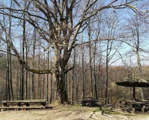 Ozren Sokobanja izvor Šopur u proleće
