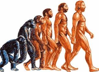 В чём ошиблась теория эволюции?