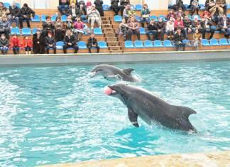 Чудо в дельфинарии