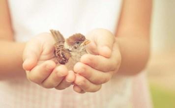 5 восхитительных статей о доброте