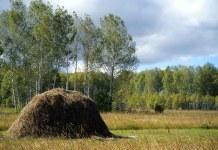 Гроза в поле