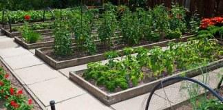 Огород по Миттлайдеру – произведение искусства