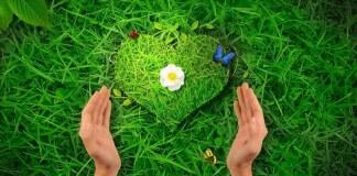Охрана природы – 5 простых вещей, которые могу сделать я, и 5 статей для мотивации