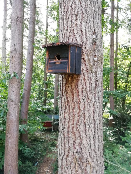 Nichoir à oiseau en bois brûlé fixé en hauteur sur le tronc d'un arbre