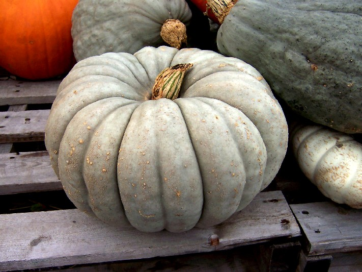Winter squash in Germany (primer)