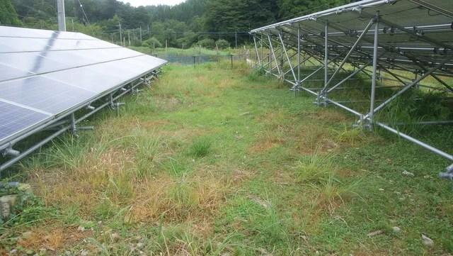 yukenさんの太陽光発電所における雑草対策
