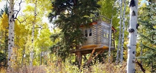 Colorado Treehouse smoke shack
