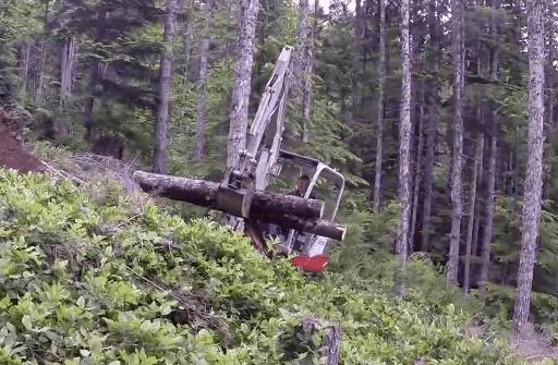 mini excavator carries logs