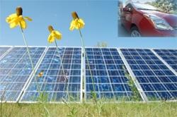 solar panels, flowers, Toyota PHEV
