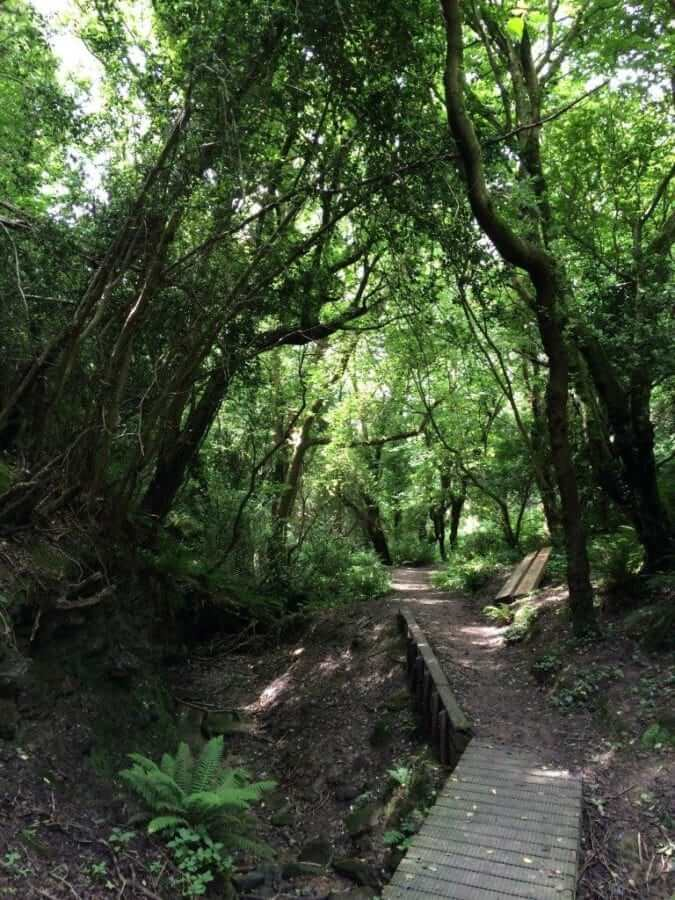 Nature Reserve near Hastings