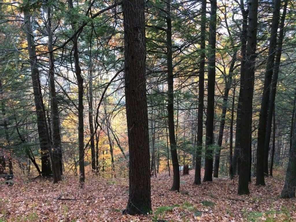 Catskills Mountain Walk