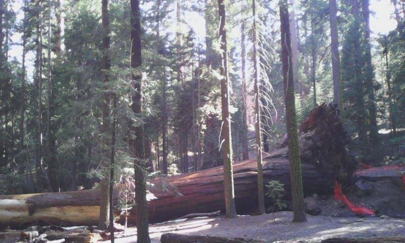 Sequoia National Forest