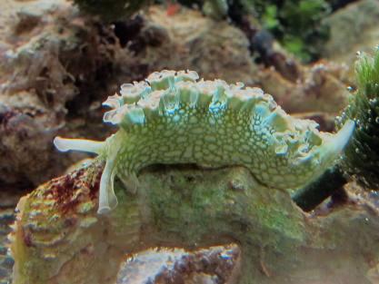 E. clarki in Box of Slugs 1.0