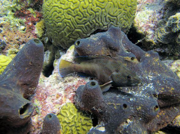 2771_fish_sponge
