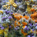 Sponges on mangrove roots, Bonaire 1/16/16.