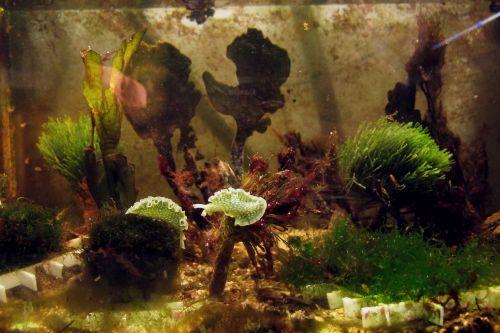 Slugs among algae selection 2/12/16