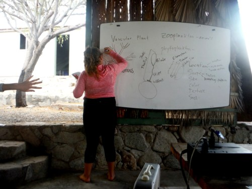 Rosalia drawing an example of a dichotomously branching alga. 6/29/16