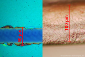 SolarWindow™ Transports Electricity Within Coatings Using Microscopic Channels (Left) That Are One-Half the Width of Human Hair (Right)