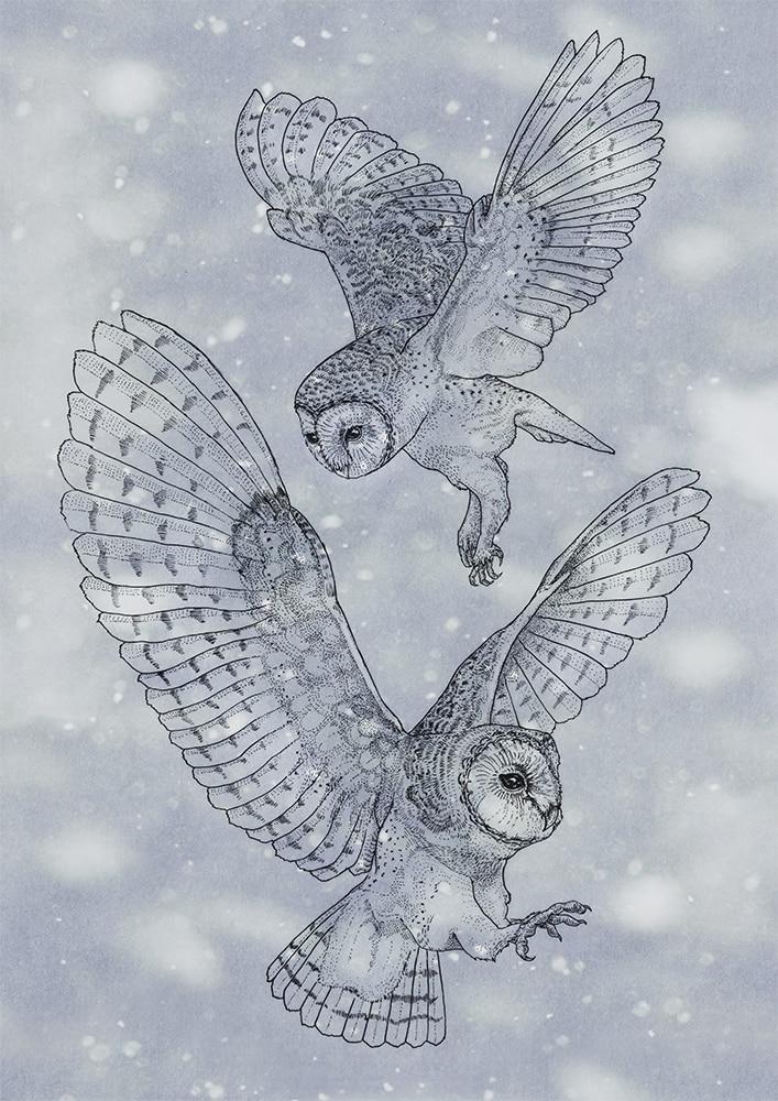2020 - Owls