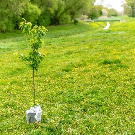 Baumpatenschaften