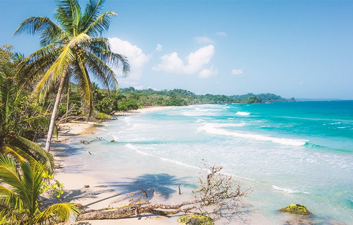 beautiful weather and clear skies at red frog beach with palm trees and turquoise waters on isla Bastimentos in Bocas del Toro, Panama.