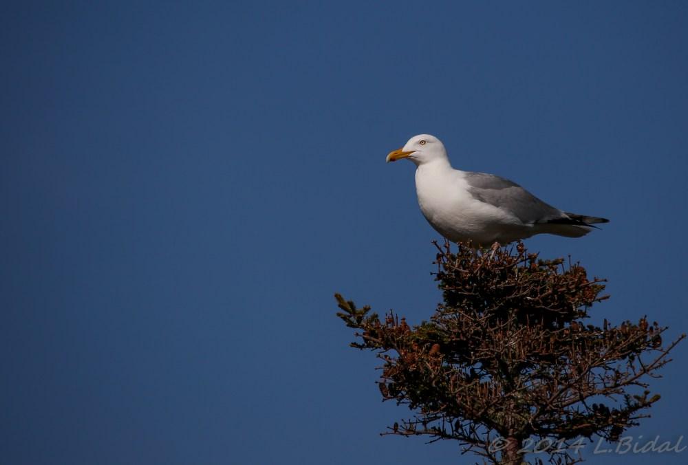 Bon Portage Island (3/6)