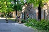 Feuerwehrfrauen zersägen umgefallenen Baum in der Nordbahnstraße (3)