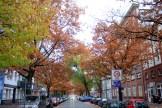 herbst-eichen-koloniestrasse-1