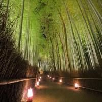 Arashiyama et sa forêt de bambou, la nuit..