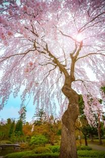 Aomori, Fujita Memorial Garden ( Soleil Levant 75 )