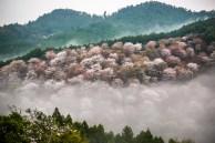 Mont Yoshino, printemps ( Soleil Levant 75 )