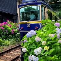Kamakura, ligne ferrovaire à la saison des hortensias.