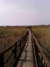 camminamento1